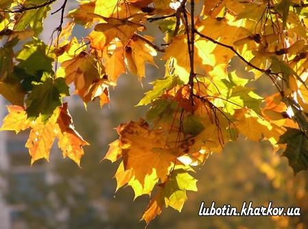 Пізня осінь